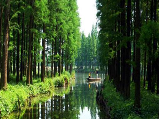 【享樂游泰州】李中水上森林公園、梅蘭芳紀念館、夜游鳳城河、泰州老街、溱湖濕地二日游(含夜游鳳城河)